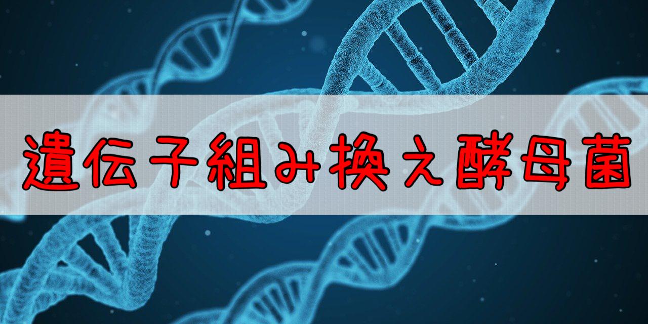 酵母は遺伝子操作されている